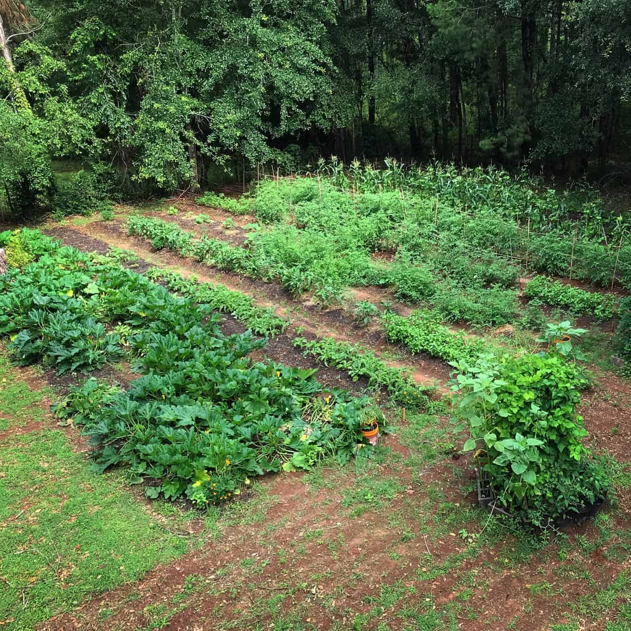 Organic Catering in Tallahassee, Florida
